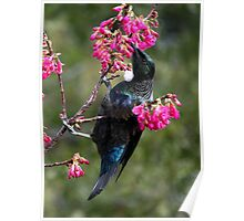 Tui.......lost among the blooms......! Poster