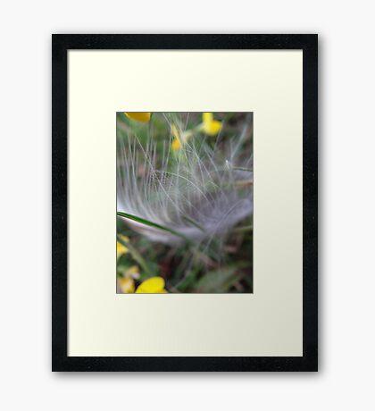 Feathery fine Framed Print