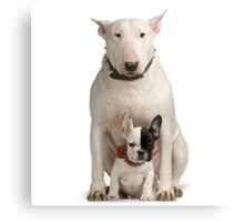 English Bull Terrier & Frenchie Friend Canvas Print