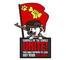Canines of the world unite! Photographic Print