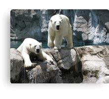 Polar Opposites Canvas Print