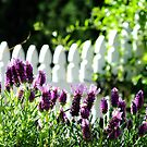 Lavender and Picket Fences by Gabrielle  Lees