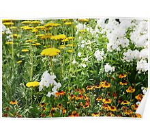 Blooming flowers in a Summer garden Poster