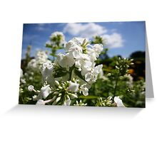 White flower and blue sky landscape Greeting Card