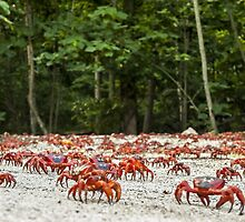 Red Crab Migration - The Journey Begins by Karen Willshaw