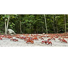 Red Crab Migration - The Journey Begins Photographic Print
