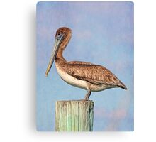 Young Brown Pelican Canvas Print