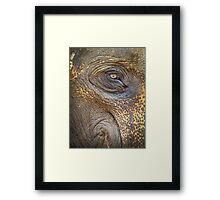 Close-up Elephant eye Framed Print