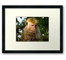 Macaque with baby Framed Print