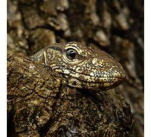 Varanus in tree Photographic Print