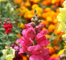 Snapdragons in an English country garden Sticker