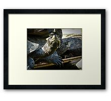 Turtles in front of the Angurukaramulla Temple Framed Print