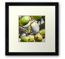 Manila Palm Green Framed Print