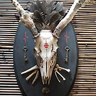 whitetail deer skull mount assemblage by AnjiMarth