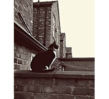 Corrie Cat! Photographic Print