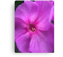Small Pinkish-Purplish Flower Canvas Print
