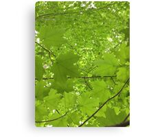 Leaves Above Me Canvas Print