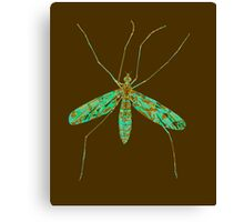 Primitive Crane Fly 2 Canvas Print