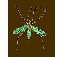 Primitive Crane Fly 2 Photographic Print
