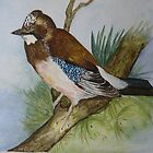 MY GARDEN JAY by Marilyn Grimble