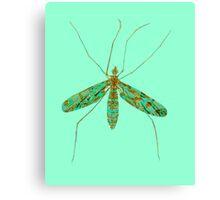 Primitive Crane Fly 3 Canvas Print