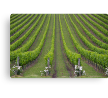 White Christmas, Or Red? (Depends On The Colour Of Your Wine!) Canvas Print