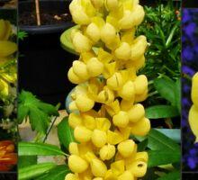 Sunkissed Golden Flowers Collage Sticker