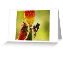 the honey eater Greeting Card