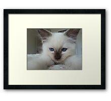 Kitten Framed Print