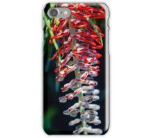 Australian flora in bloom iPhone Case/Skin