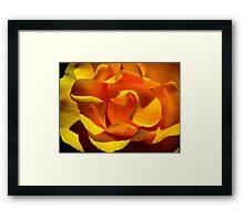 Inner Life of the Venice Beach Rose 1 Framed Print