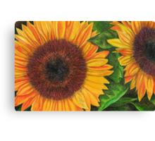 Sunflower Sketch Canvas Print