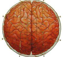Cerebral Hyperstereogram II by Kathryn Skelsey