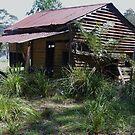 Forest Cabin 1 by Liz Worth