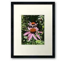 Two Pink Flowers Framed Print