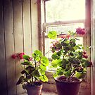 Still Life with Geraniums IV by Ludwig Wagner