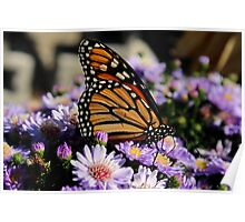 Butterfly on Asters I Poster