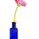 Gerber Daisy in Blue Bottle by Martie Venter