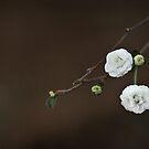 Spring Sonnet II by Martie Venter