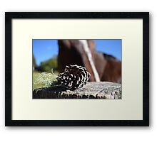 Pine cones and horses Framed Print