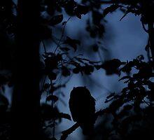 Long-eared Owl at midnight. by Remo Savisaar