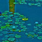 Serenity by Nira Dabush