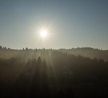 Cool Mist and Sunbeams  by Georgia Mizuleva