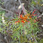 Grevillea in the Park #1 by kalaryder
