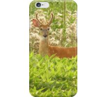 Beautiful Buck  iPhone Case/Skin