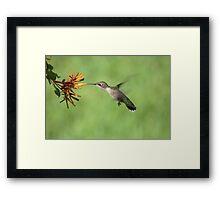 Ruby Throat Hummingbird Framed Print