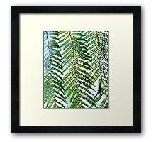 Patterns Emerge Framed Print