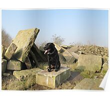 Dog on the rocks.. Poster