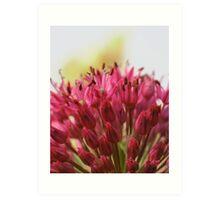 Fabulous Flowers.. Art Print