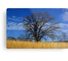 Prairie, savanna oak - blue sky and golden grass Metal Print